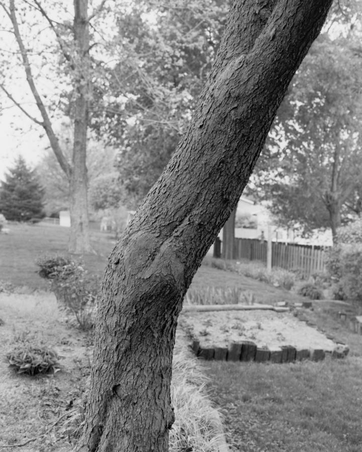 tree_02_tim.jpg