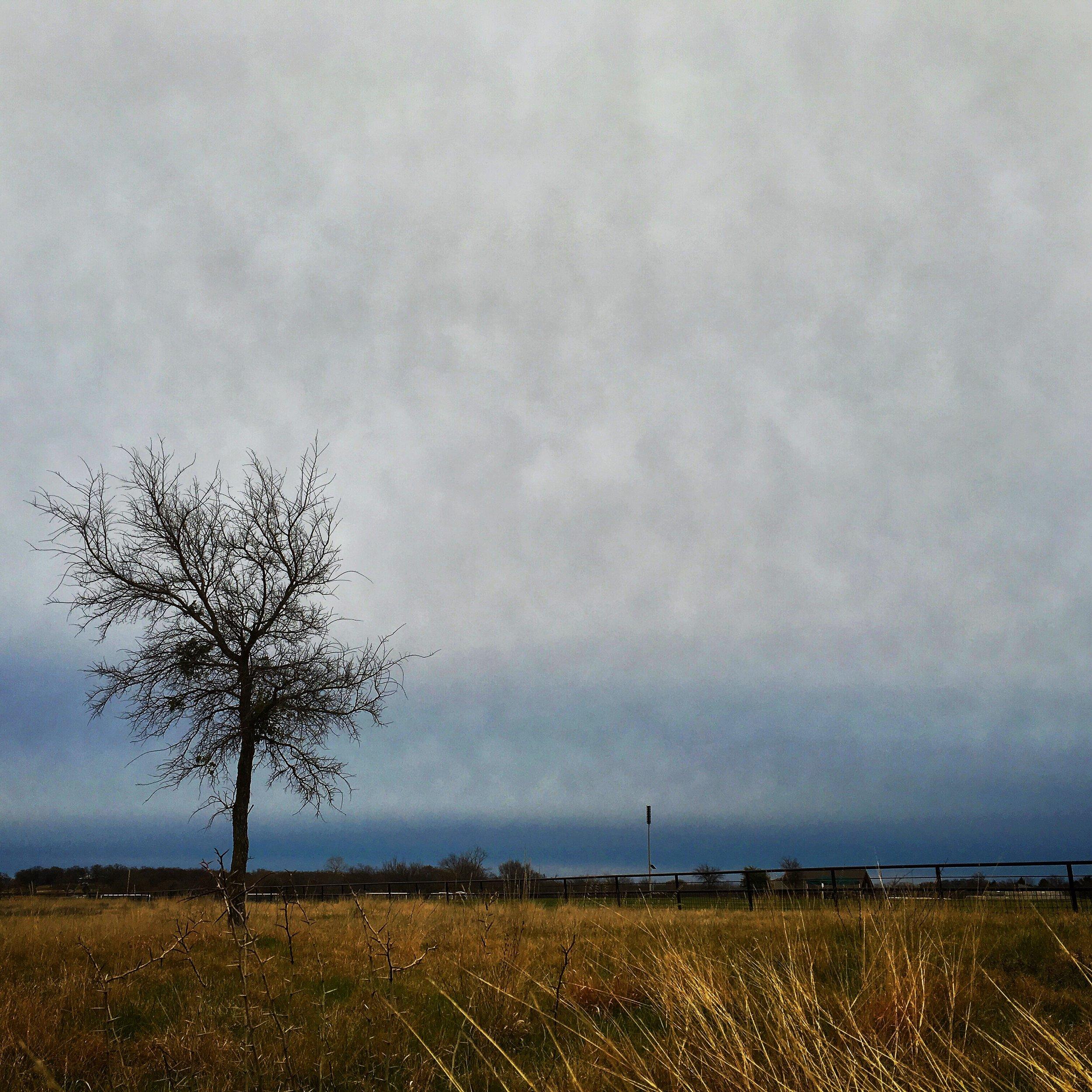 tree in winter, bob jones park, southlake, texas  ©Beatriz Terrazas, 2016