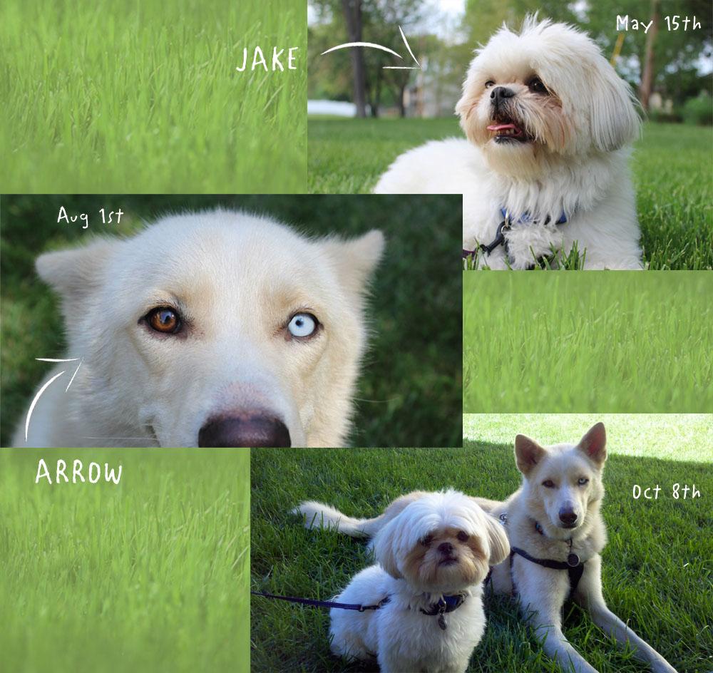 Arrow&Jake_web.jpg
