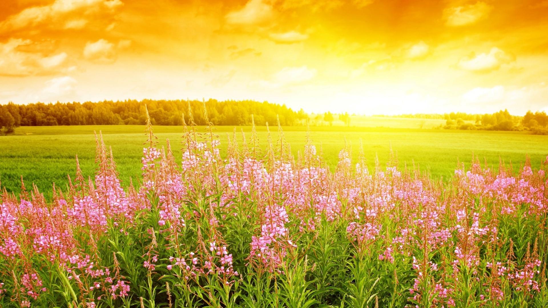 summer_field_flowers-1920x1080.jpg