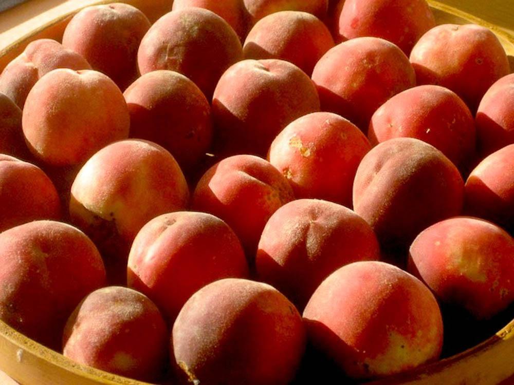 5.5 peaches.jpg