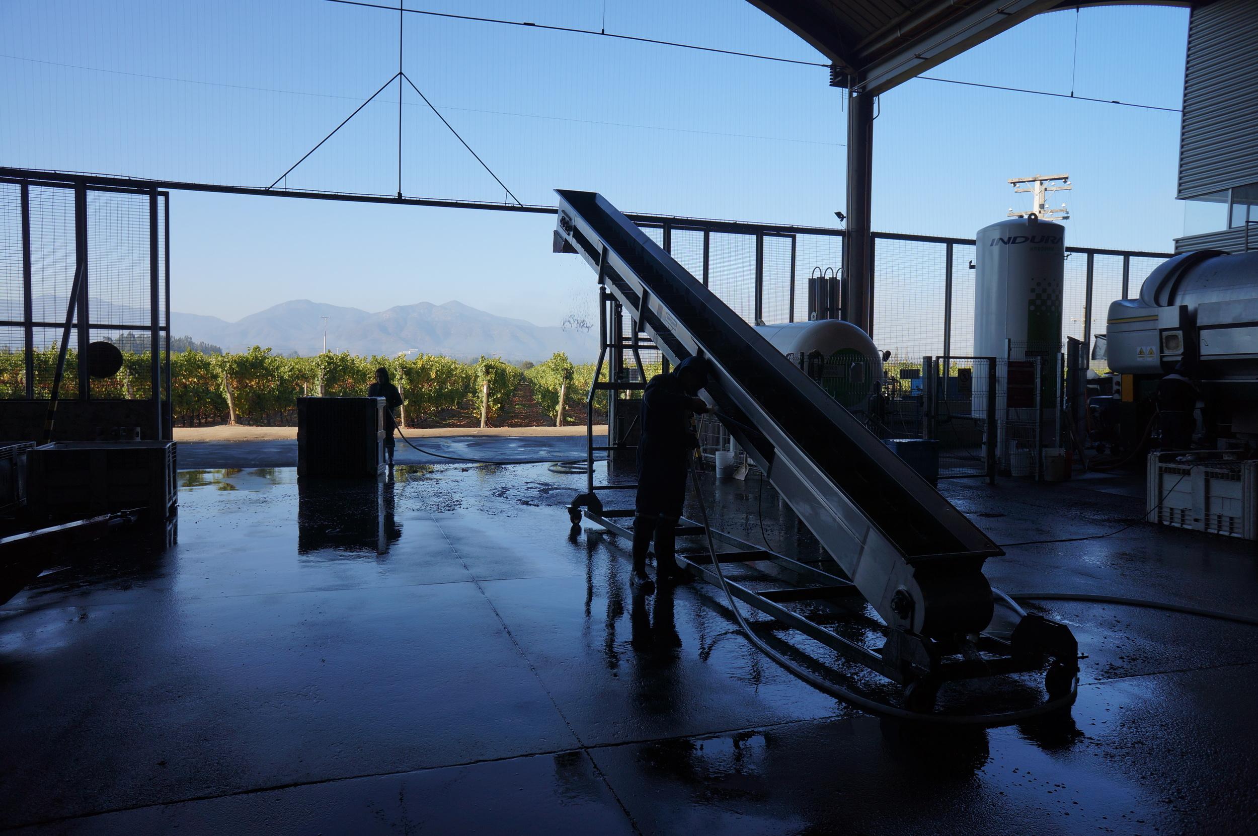 Aquí llegan las uvas una vez vendimiadas, la proximidad entre cultivos y bodega permite un proceso muy fluido.