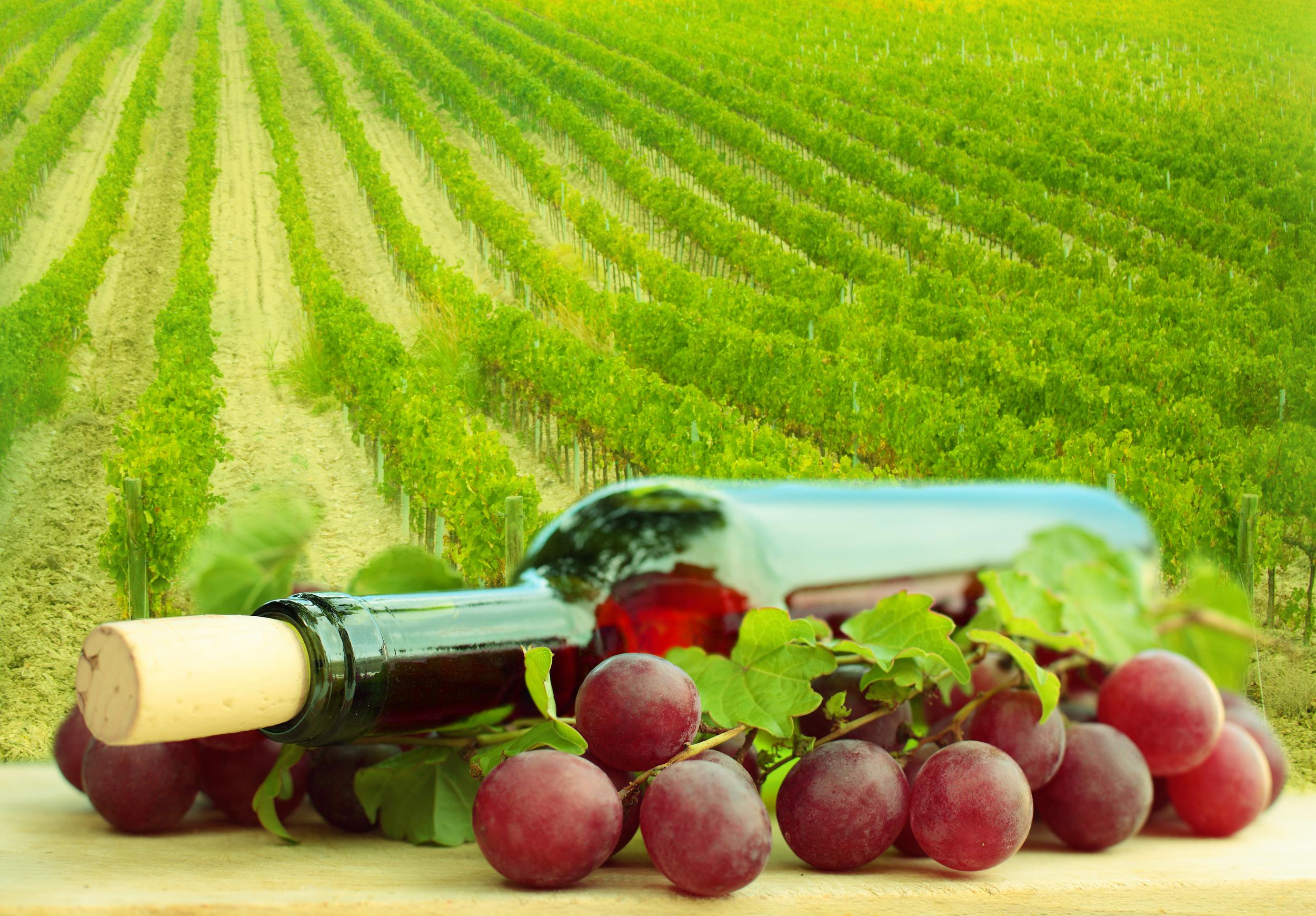vinos orgánicos