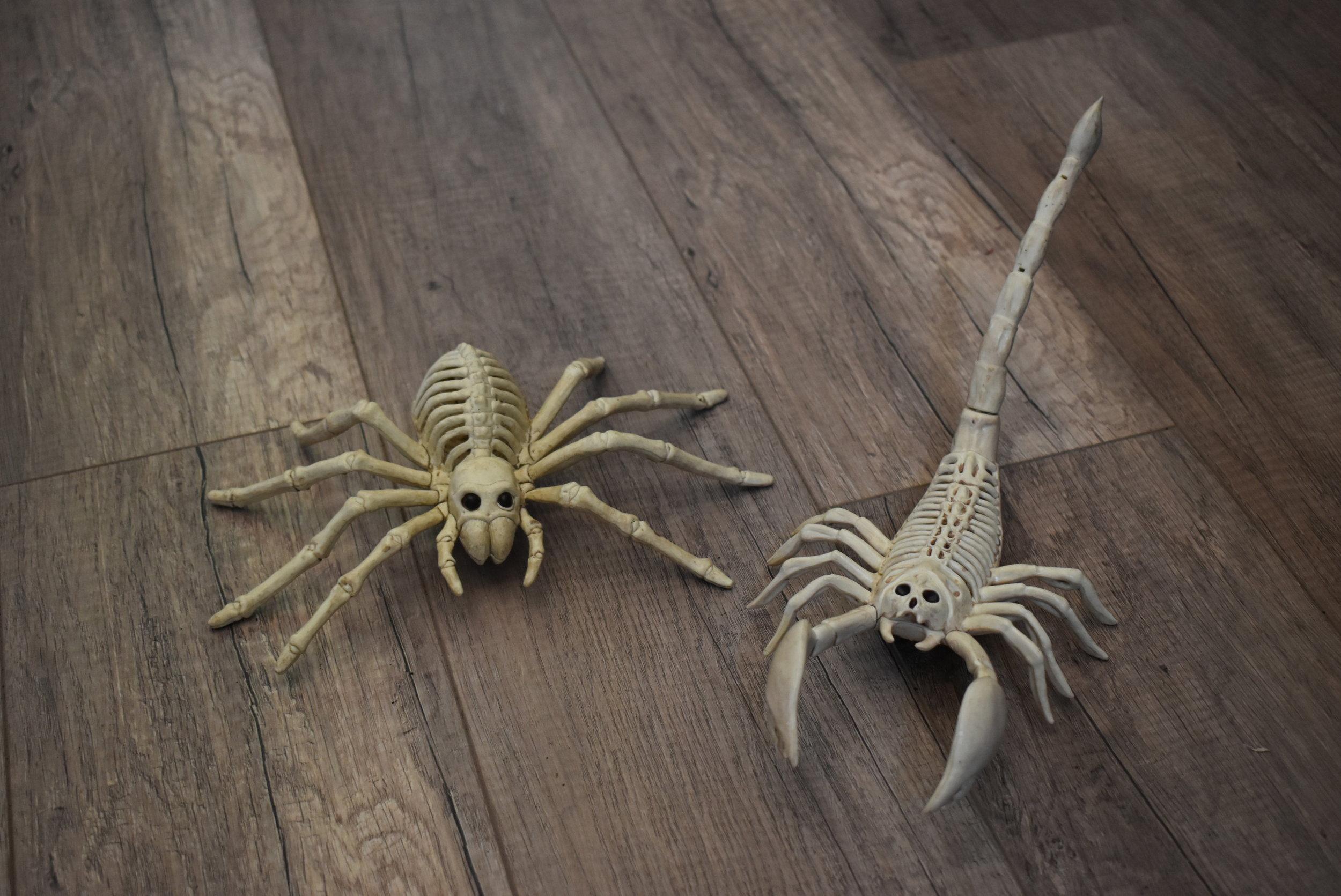 Spider & Scorpian