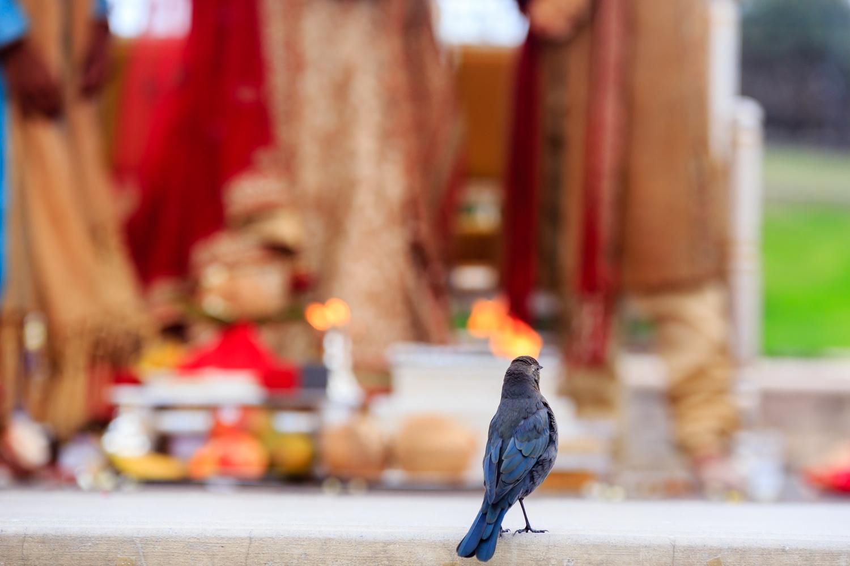 Indian Wedding Bay Area The Ritz Carlton Half Moon Bay