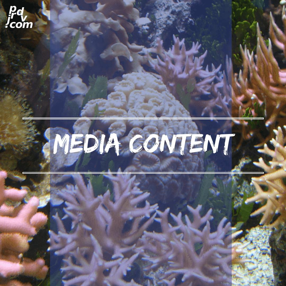 Media / Content