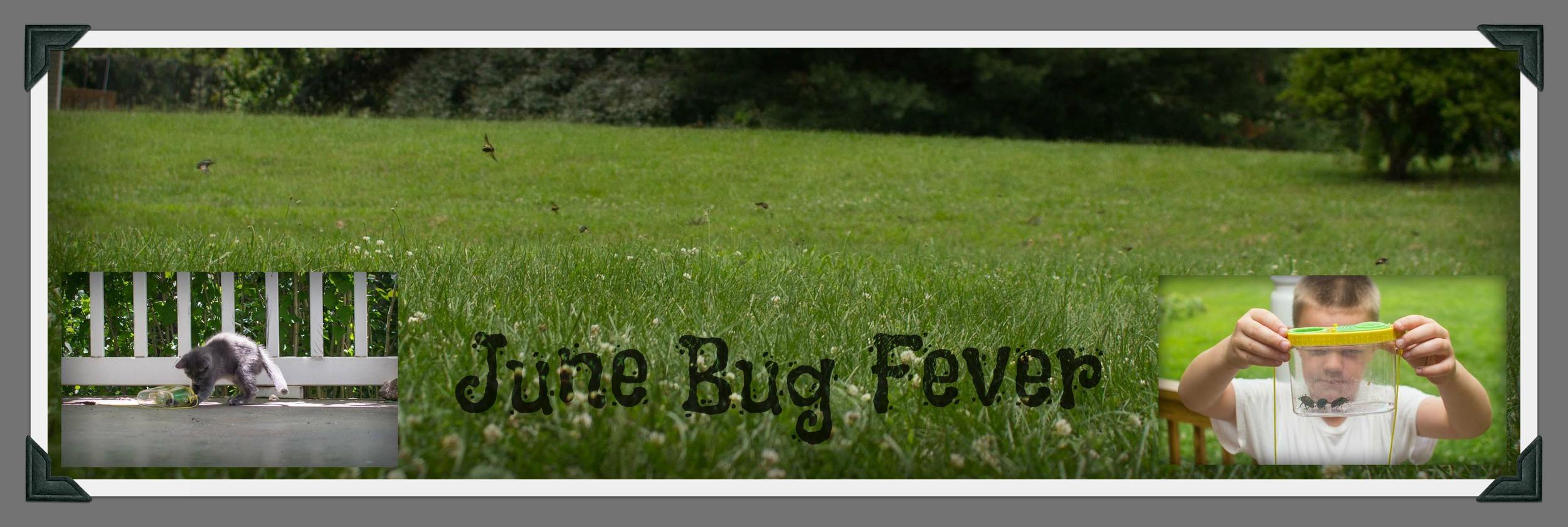 june bug fever.jpg