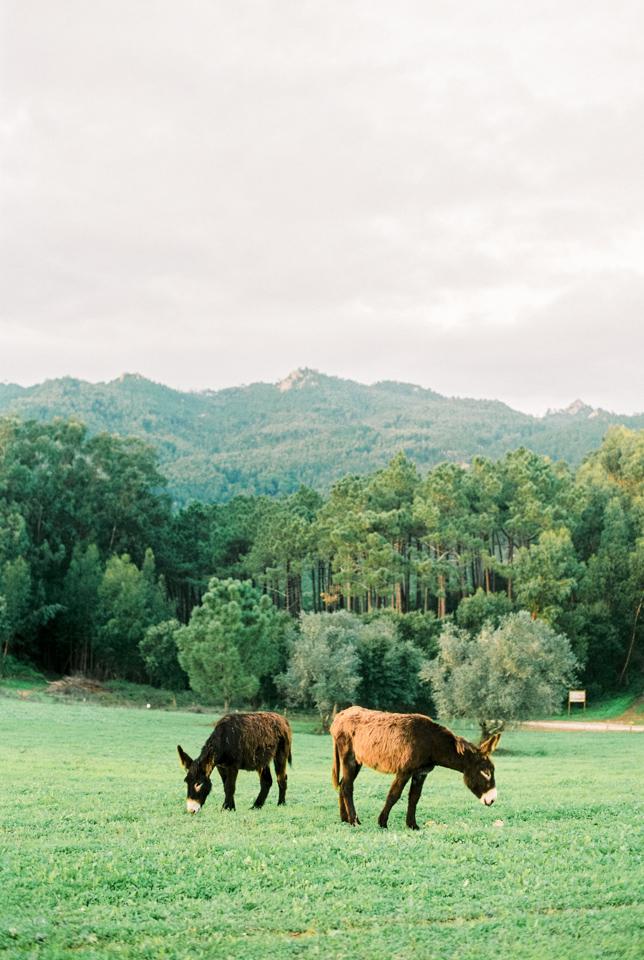 Donkeys in Sintra