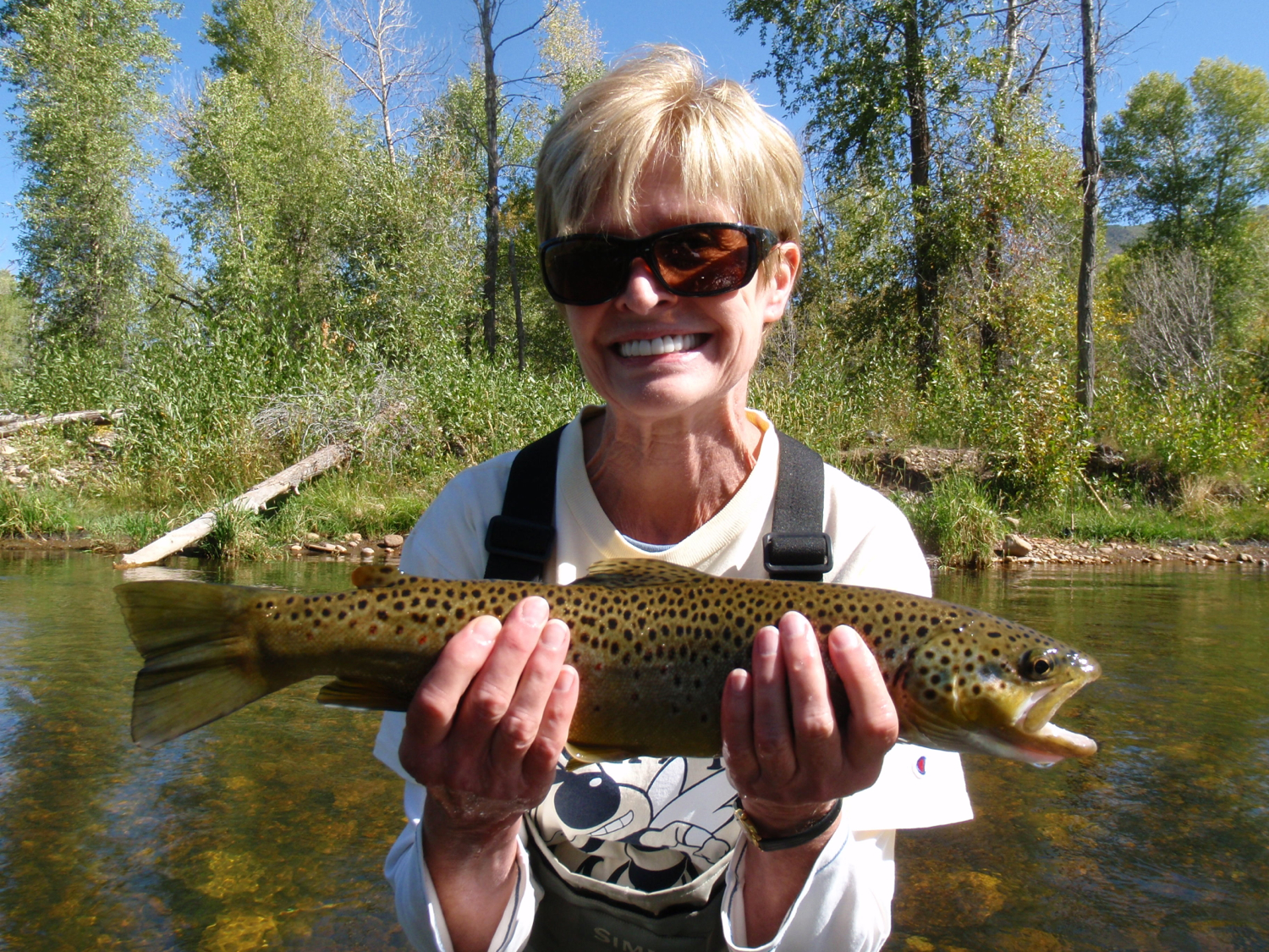 brown trout, middle provo river