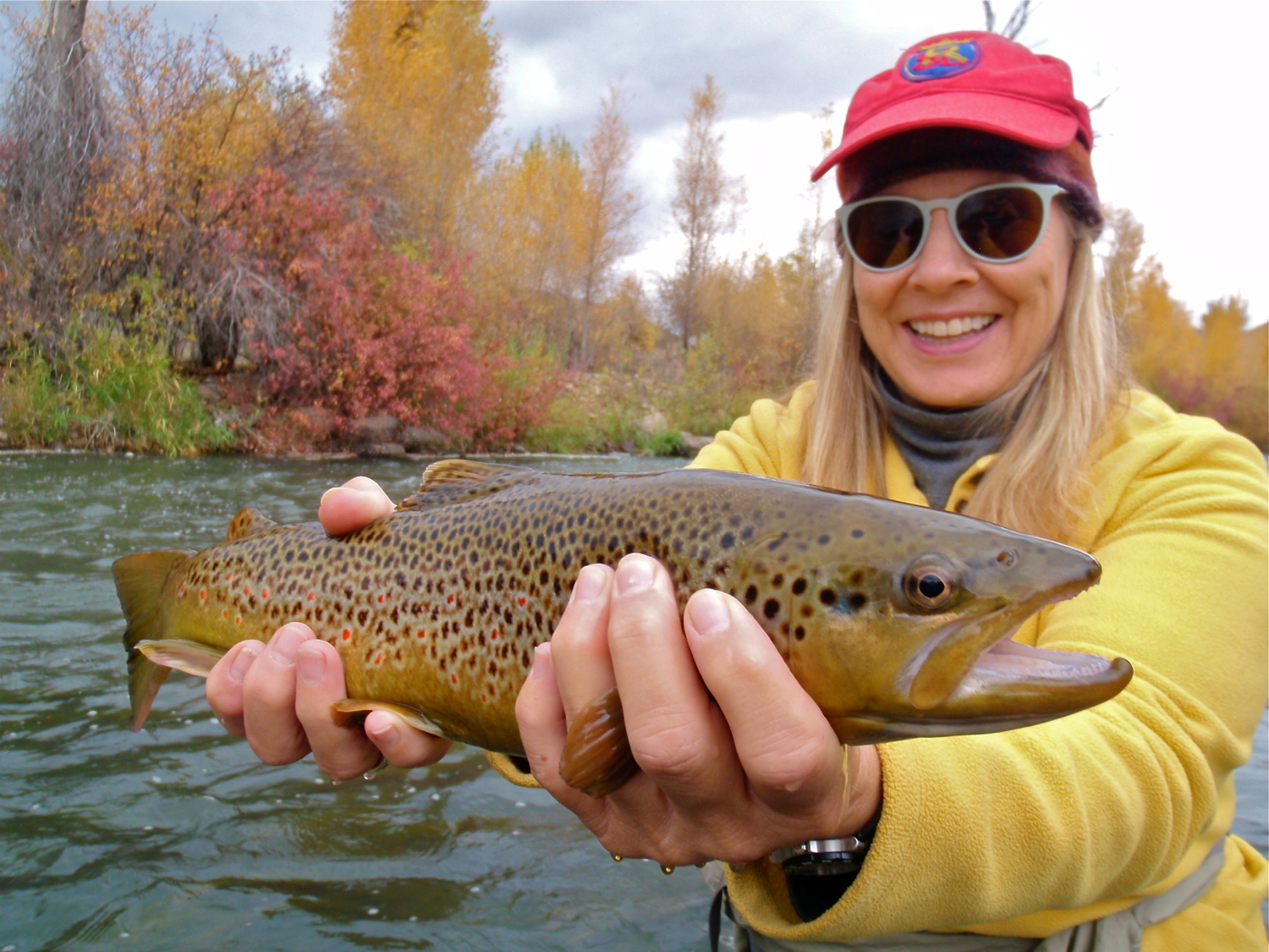 Brown Trout, Weber River