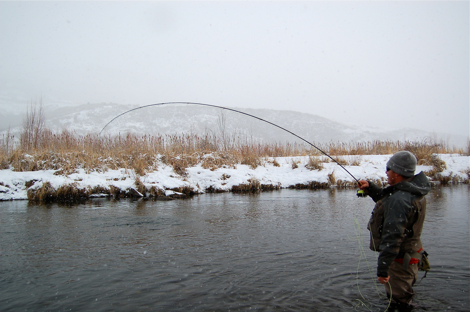 Hooked up, middle Provo River, dry fly fishing