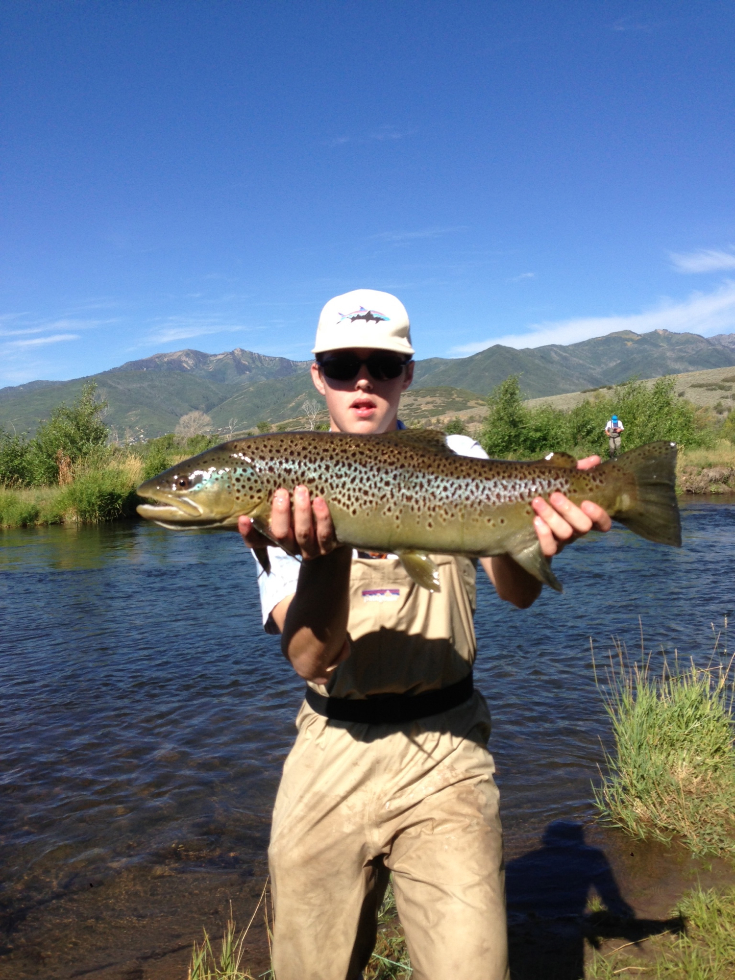 brown trout, park city fly fishing