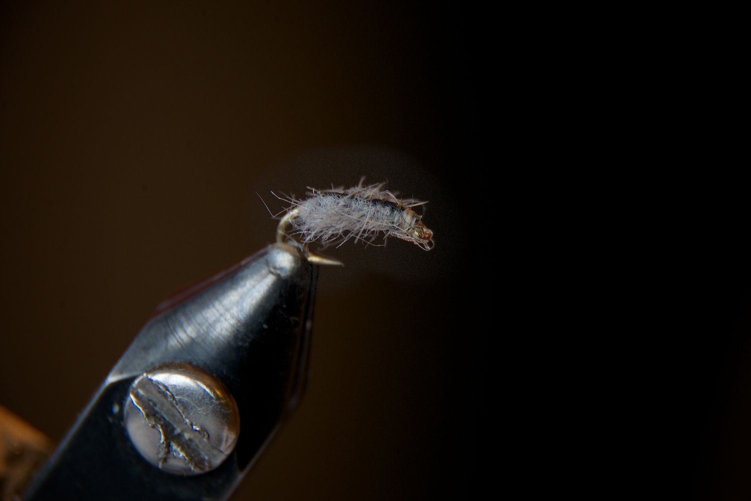 sow bug, side view