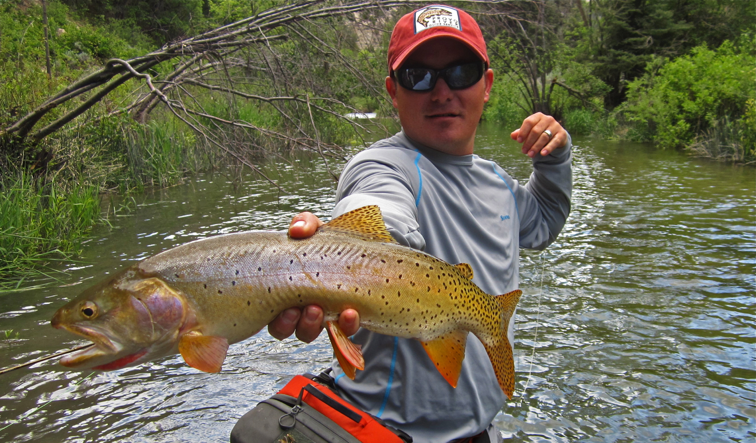 jeff with a beast of a cutthroat trout caught on the dry