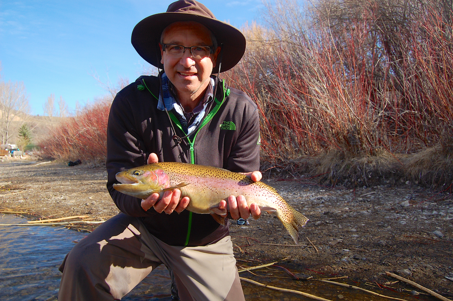 lower provo river rainbow trout