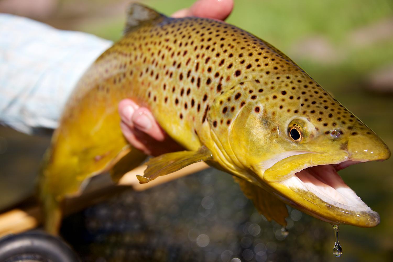 utahflyfishing.jpg