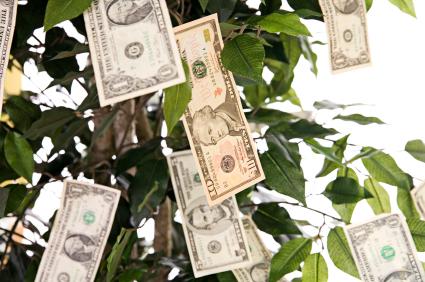 iStock_000003019357X_moneytree.jpg