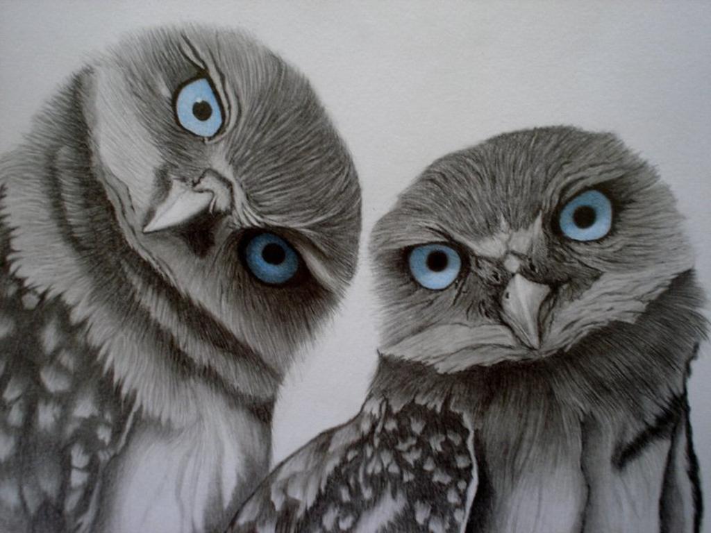 owl,cute,sweet_+Wallpaper__yvt2.jpg