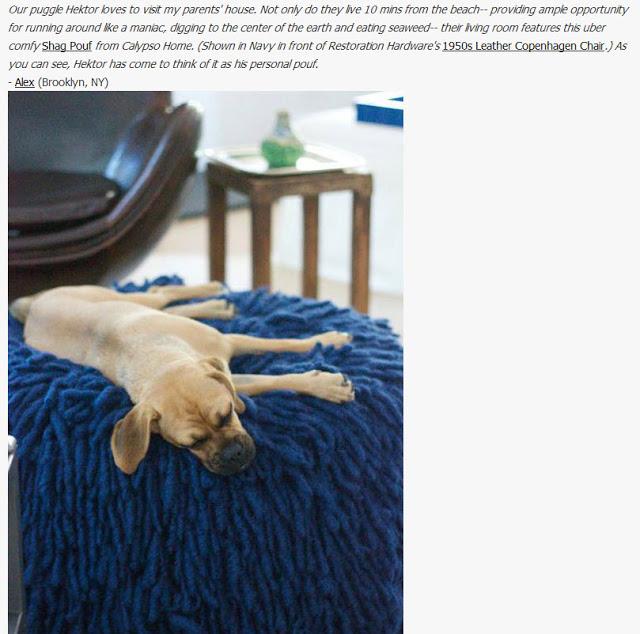 hektor+pets+on+furniture.jpg
