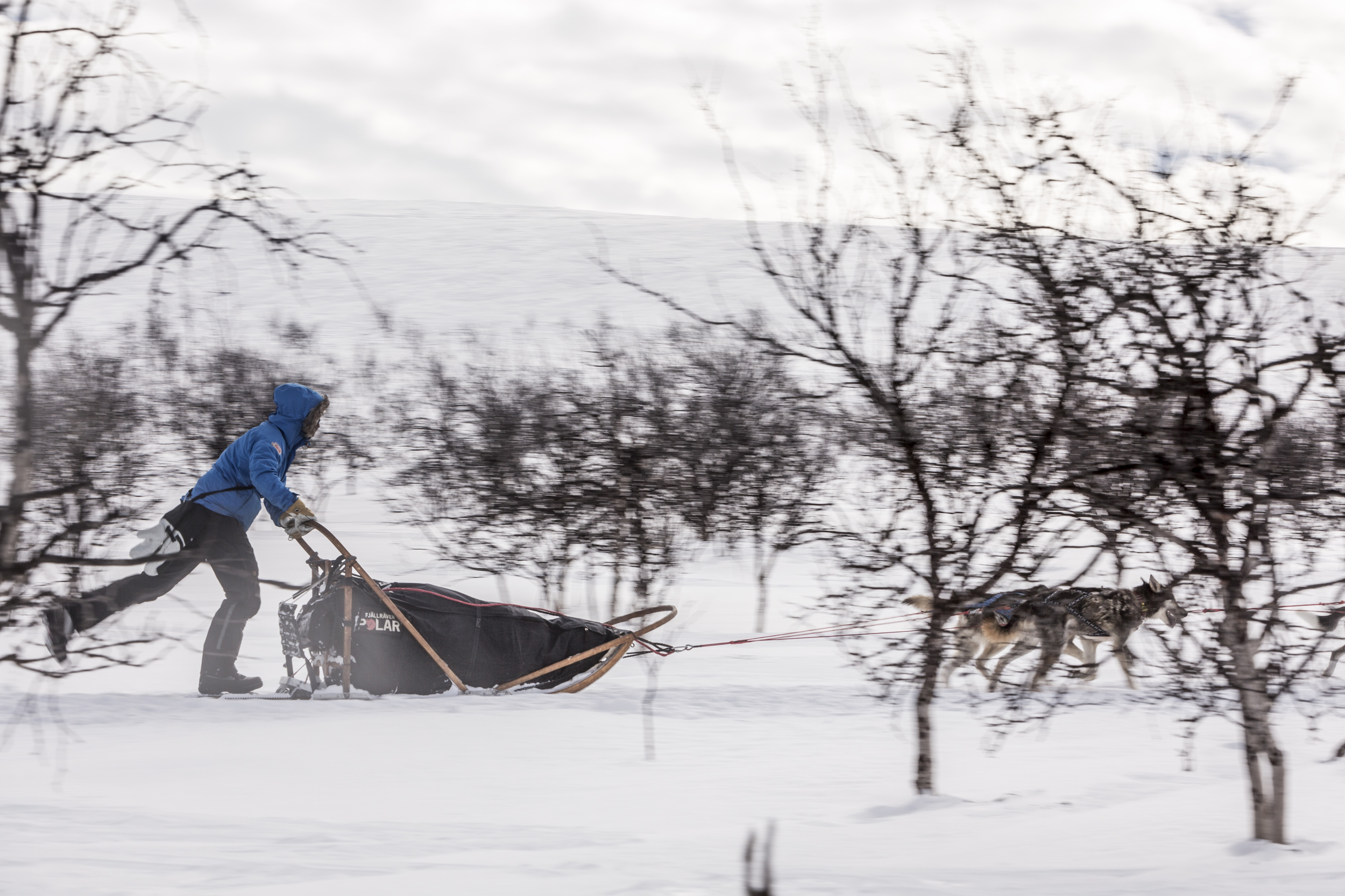There's no gentle acceleration on a dog sled. Once you release the hard brake, you pick up speed fast. (Photo by Håkan Wike for Fjällräven International. All rights reserved.)