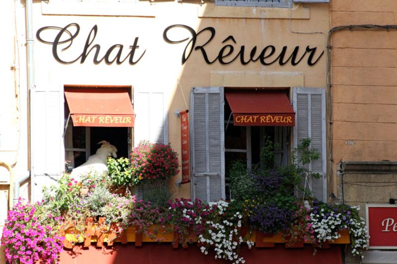 chat-reveur_s.jpg