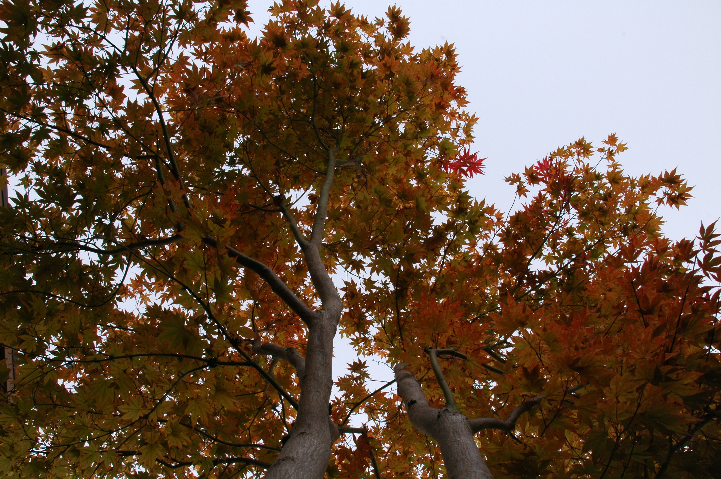 106_50_CL_tree.JPG