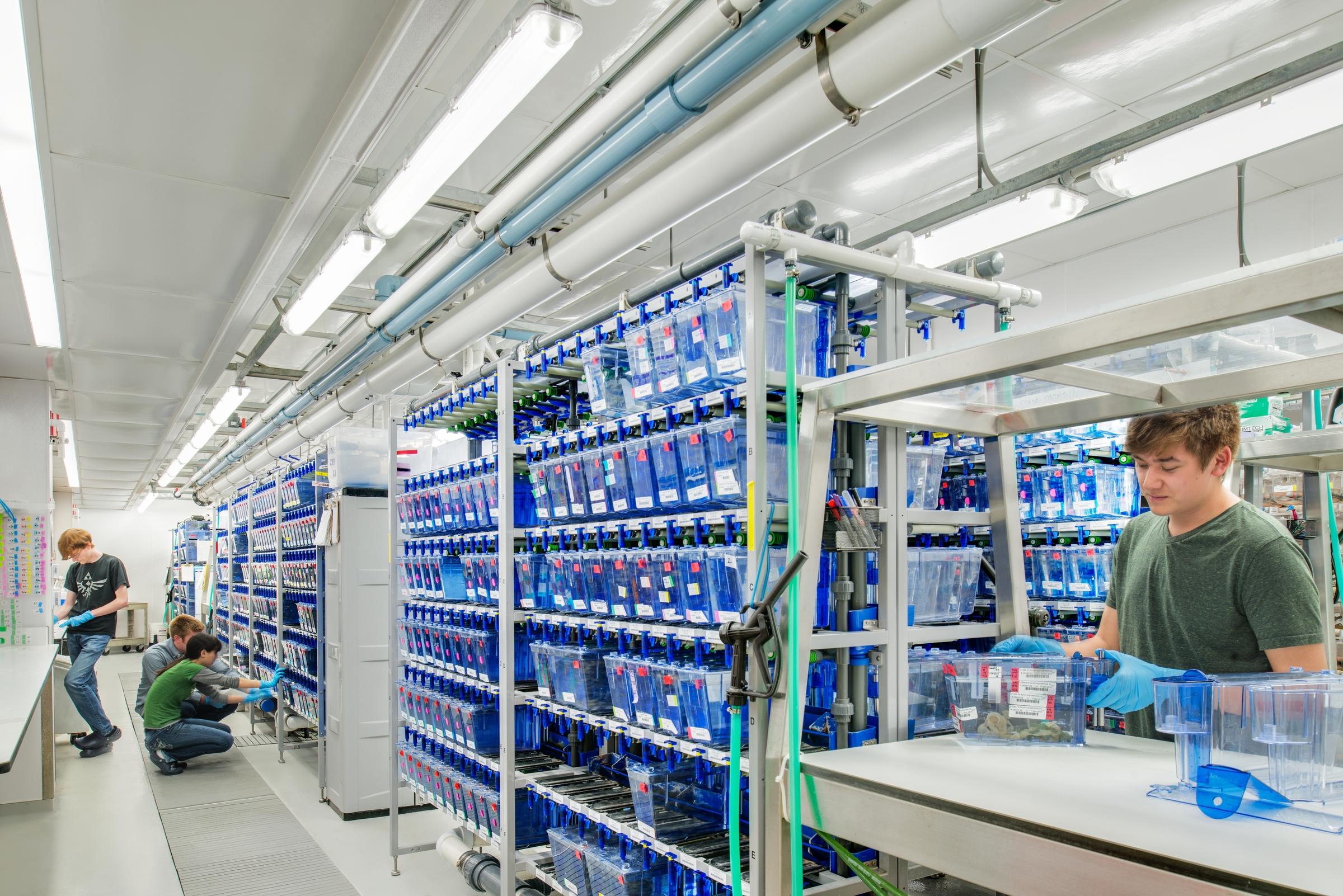 University of Oregon Huestis Zebrash Lab