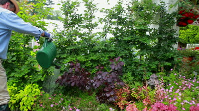 stock-footage-man-is-working-at-his-garden-at-home.jpg