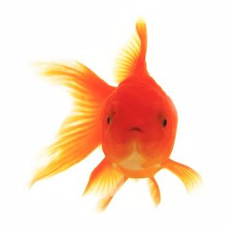 Photo by Max R for Betta Fish Tank Bank  http://fishtankbank.com/55-gallon-fish-tank/