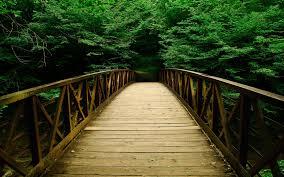 Discipline is the bridge between goals and accomplishments. - Jim Rohn