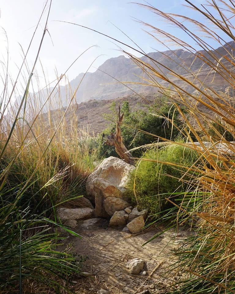 Wilderness picture - 2.jpg