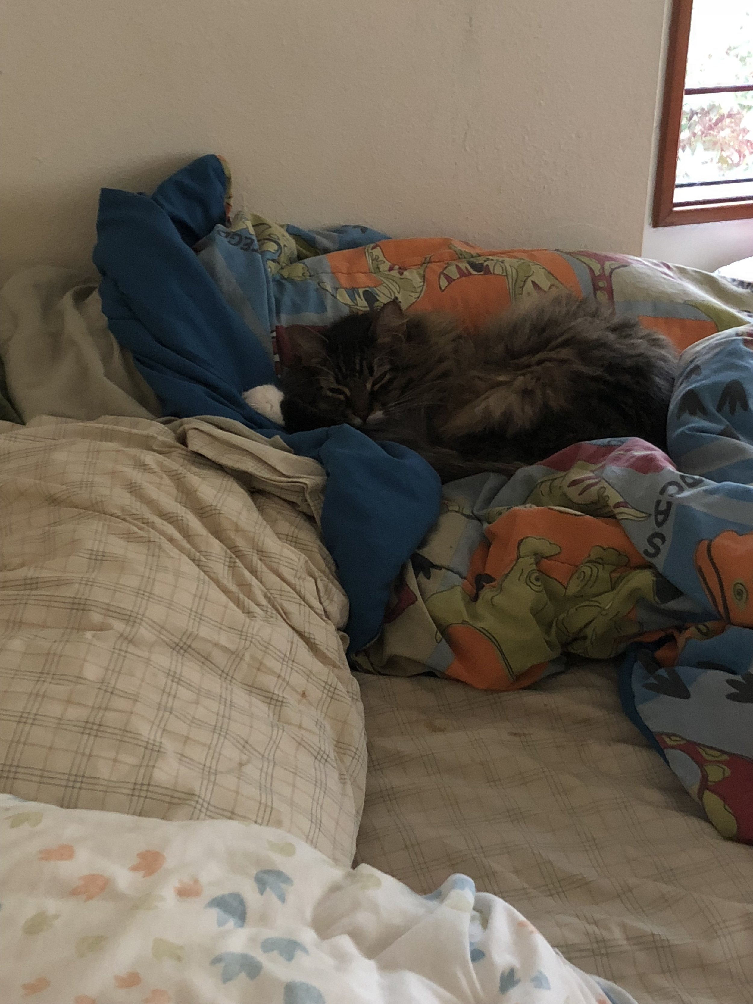 Izzie doesn't so much any more, but Cosmo will sleep on Josh's bed whenever he gets the chance.