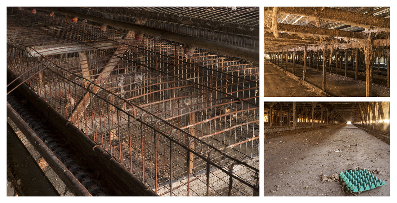 A&L Poultry - Abandoned Battery Cage Facility, 2013