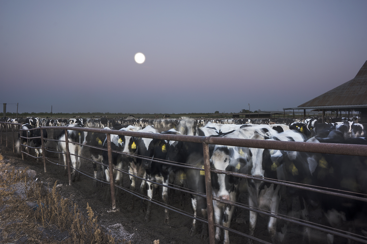 Night of the Supermoon Dairy Farm (550 Cows), 2014