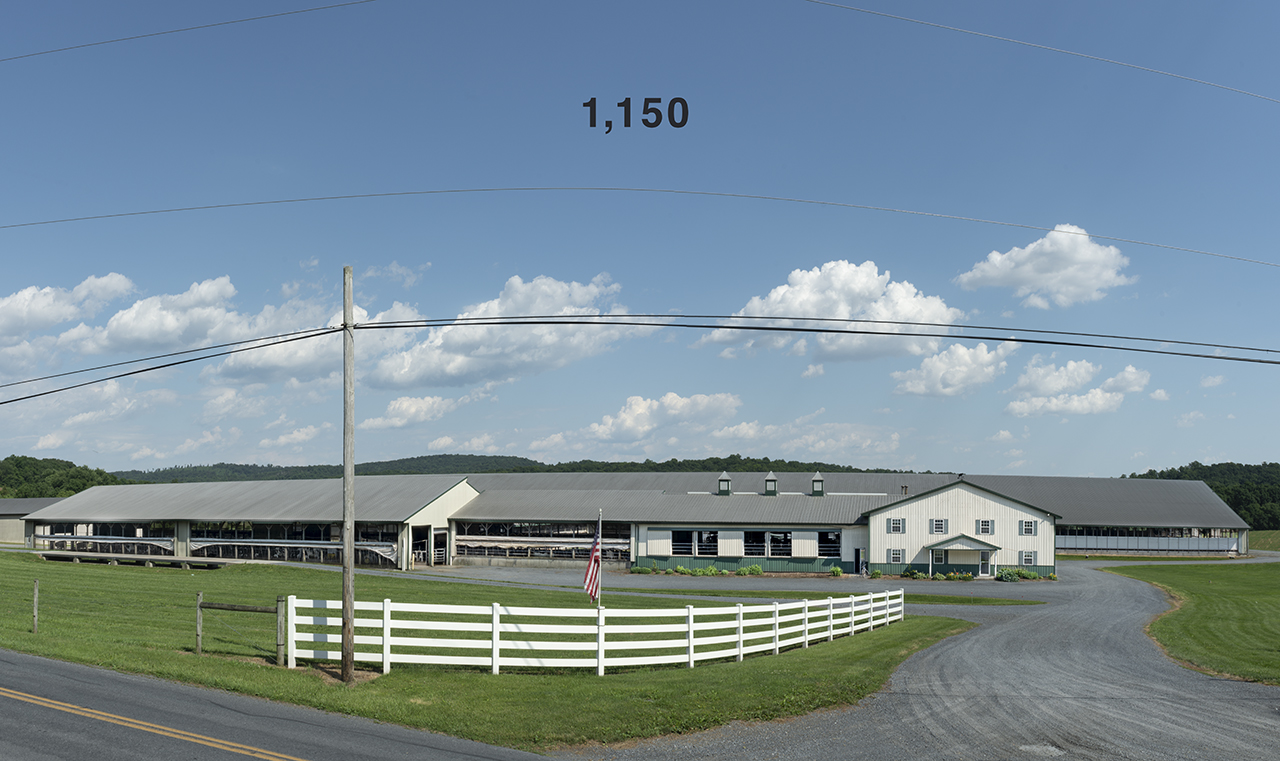 [2016-06-18B] Dairy Farm (Cows), 2016