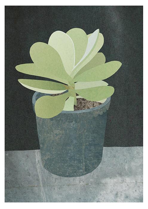 Paddle Plant, Francesca Chalk ©