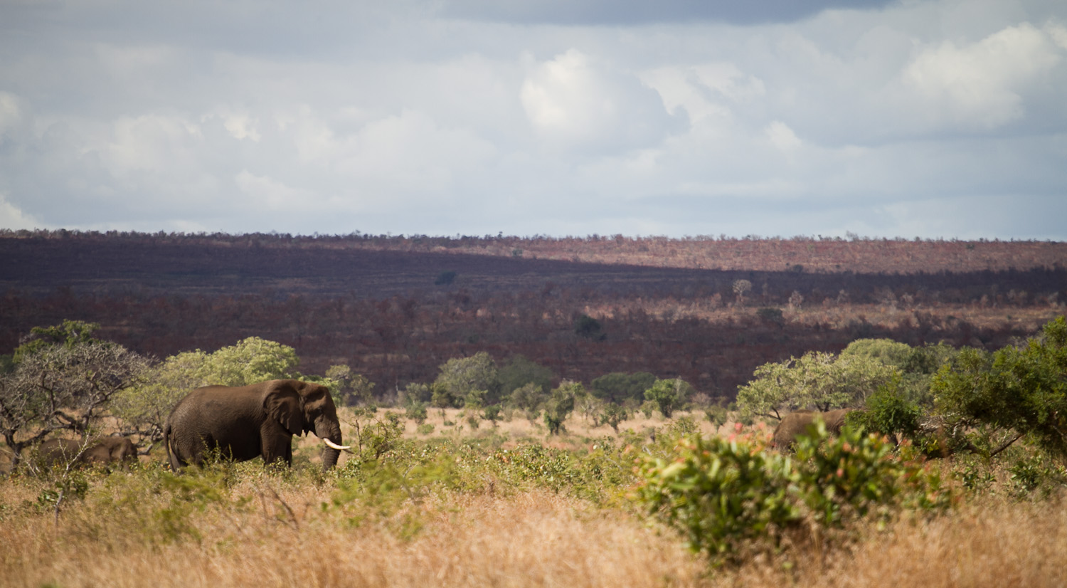 at this distance elephants are not scary at all pic: haller
