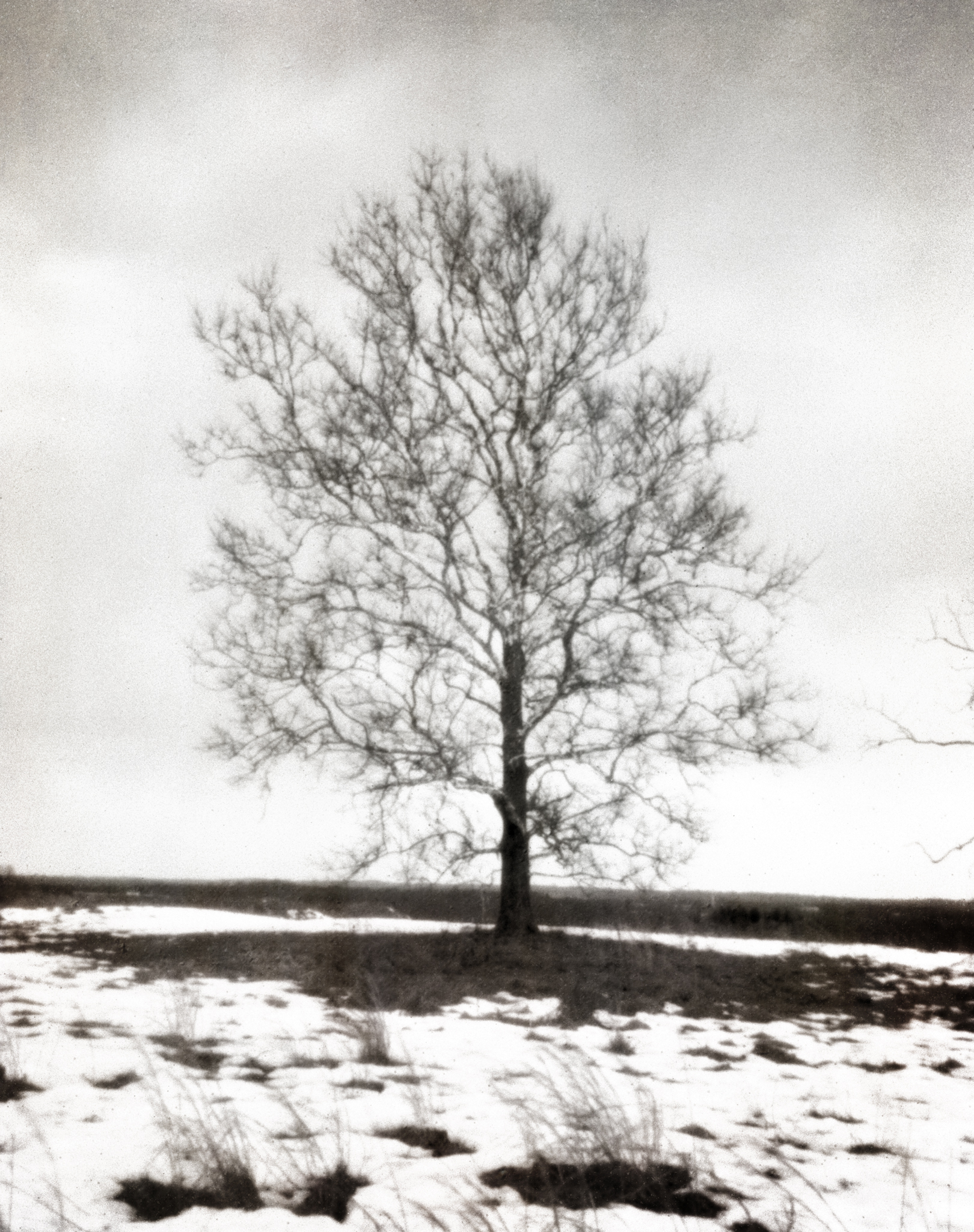 4x5_for_365_project_066_Valley_Forge_NHS_tree2.jpg