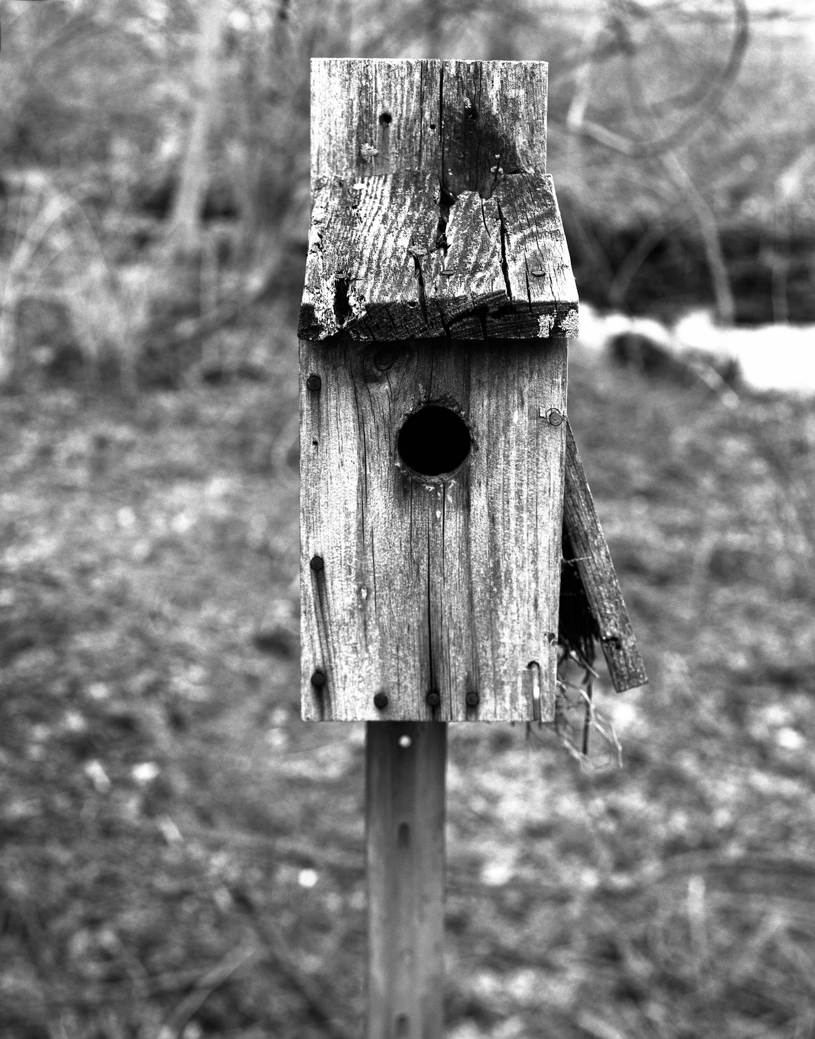 4x5_for_365_project_082_Birdhouse.jpg