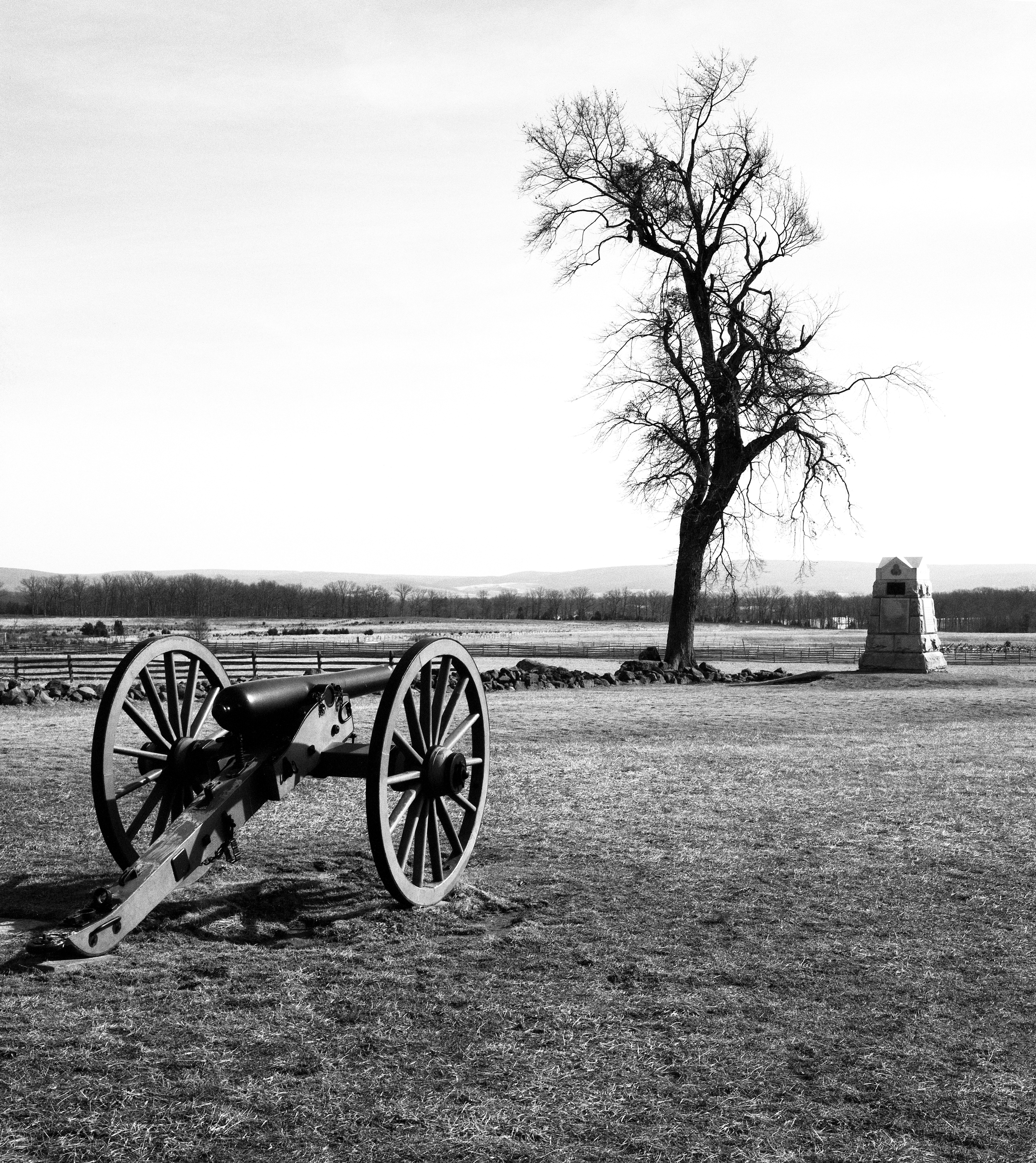 4x5_for_365_project_087_Gettysburg_cannon_and_tree.jpg