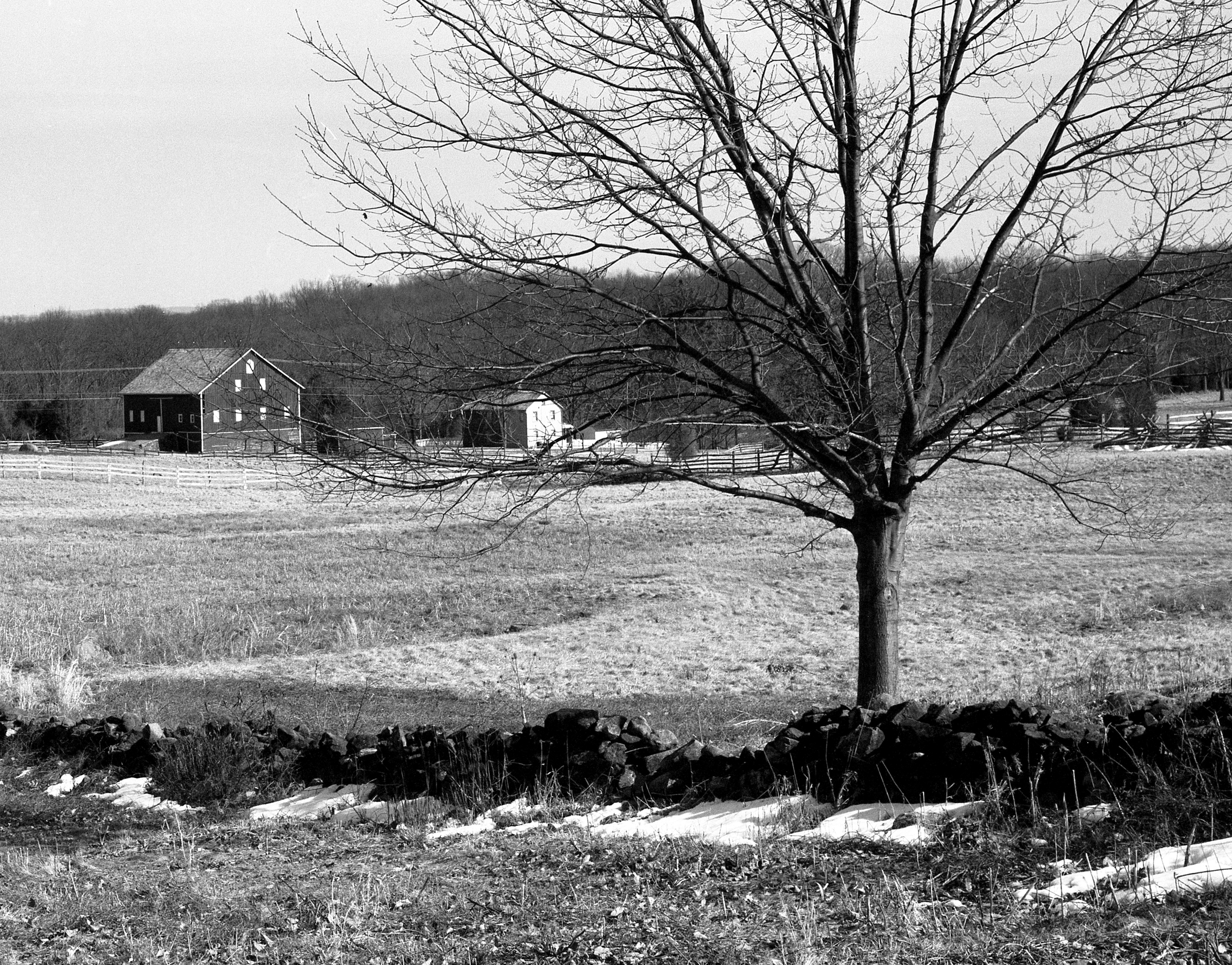 4x5_for_365_project_093_Gettysburg_barn_and_tree.jpg