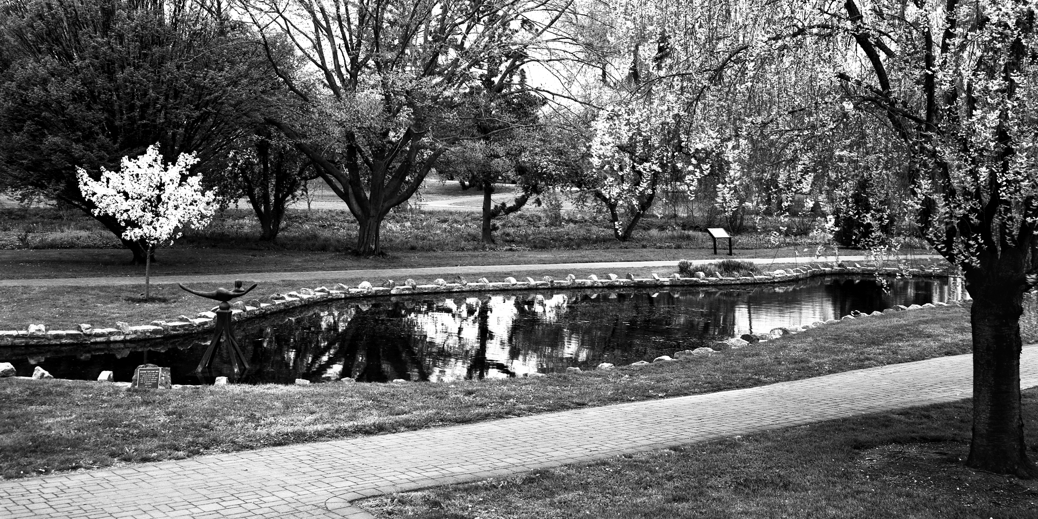 4x5_for_365_project_0130_Allentown_Rose_Garden_pond.png