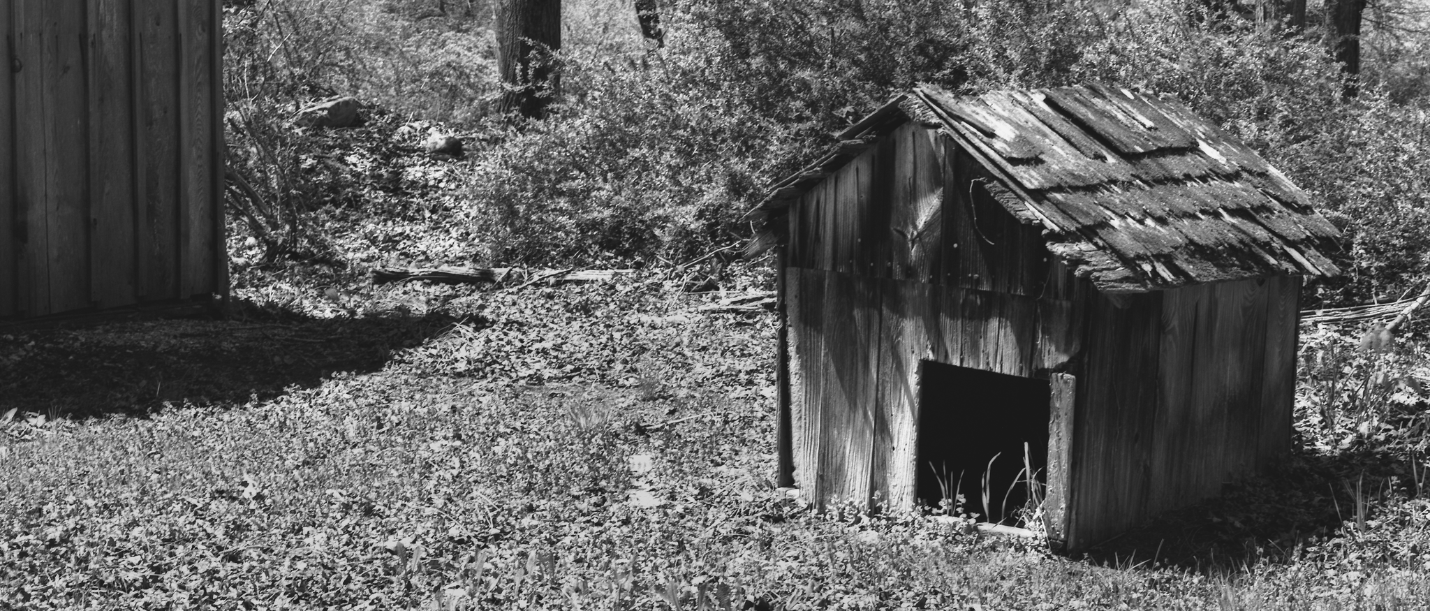 4x5_for_365_project_0143_Millbrook_doghouse.png