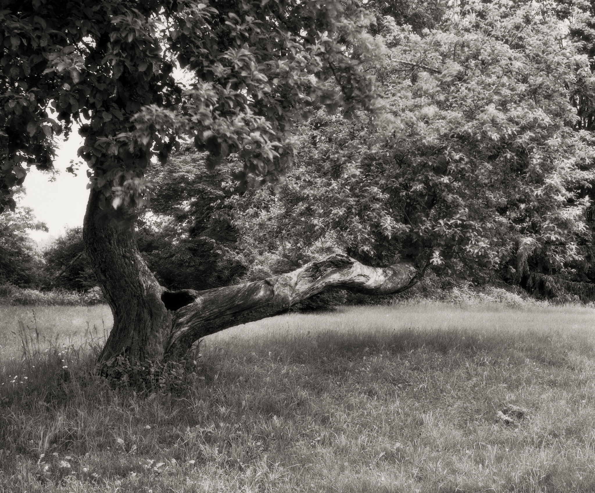 4x5_for_365_project_0154_Wallpack_Center_tree.jpg
