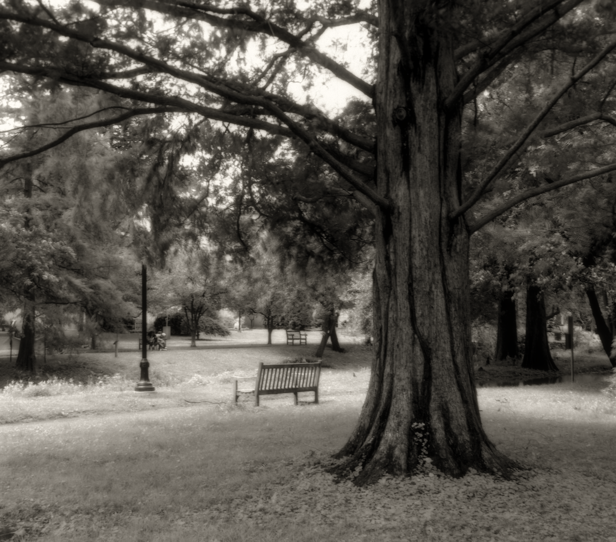 4x5_for_365_project_0189_Reading_Museum_tree_and_bench.png