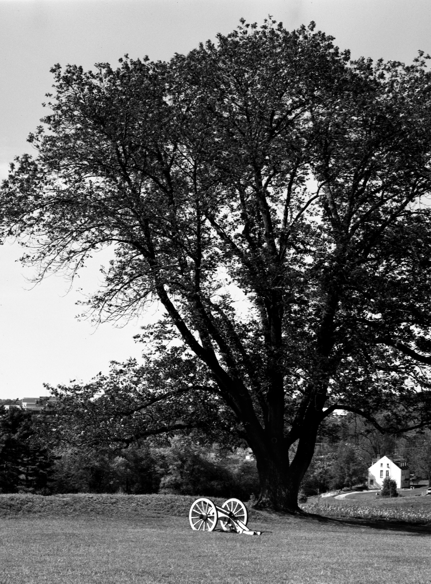4x5_for_365_project_0284_Valley_Forge_Muhlenburg_Canon.png