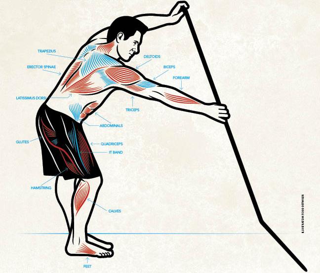 sup-muscles.jpg