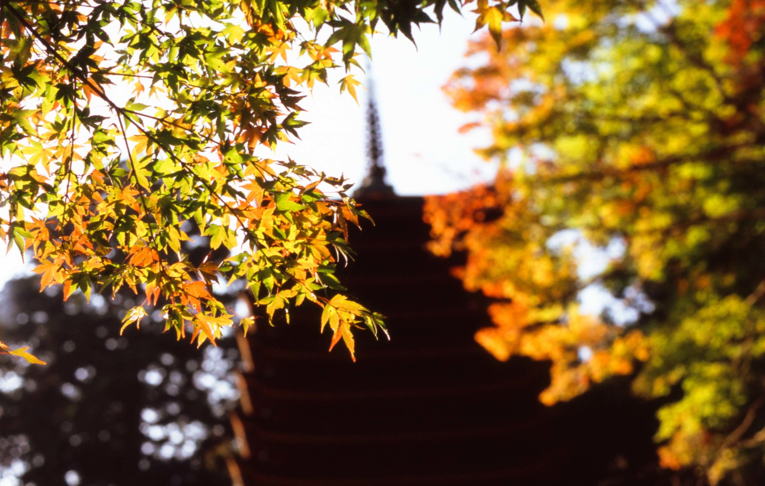 「談山神社にて」