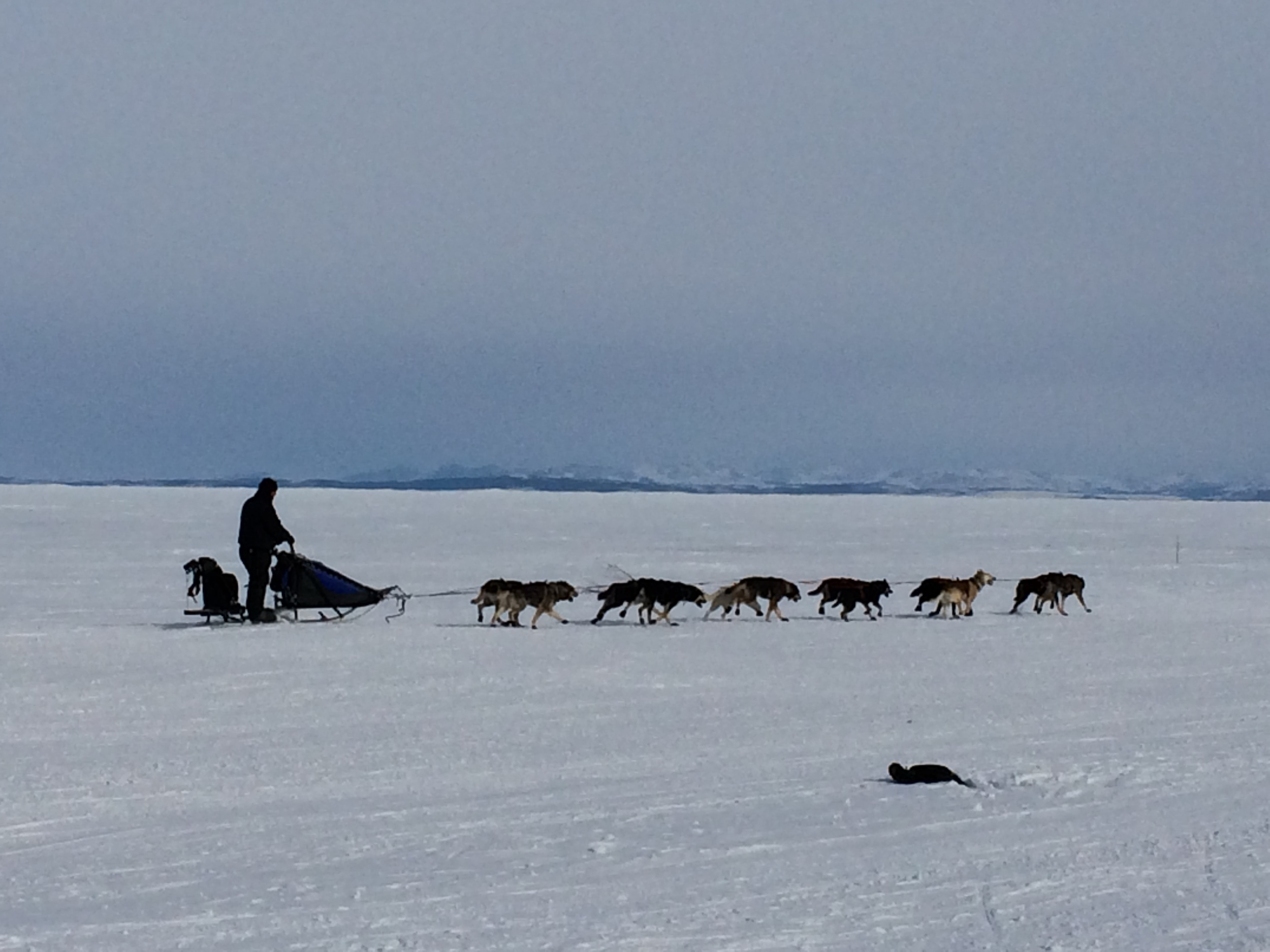 Kobuk 440 Sled Race
