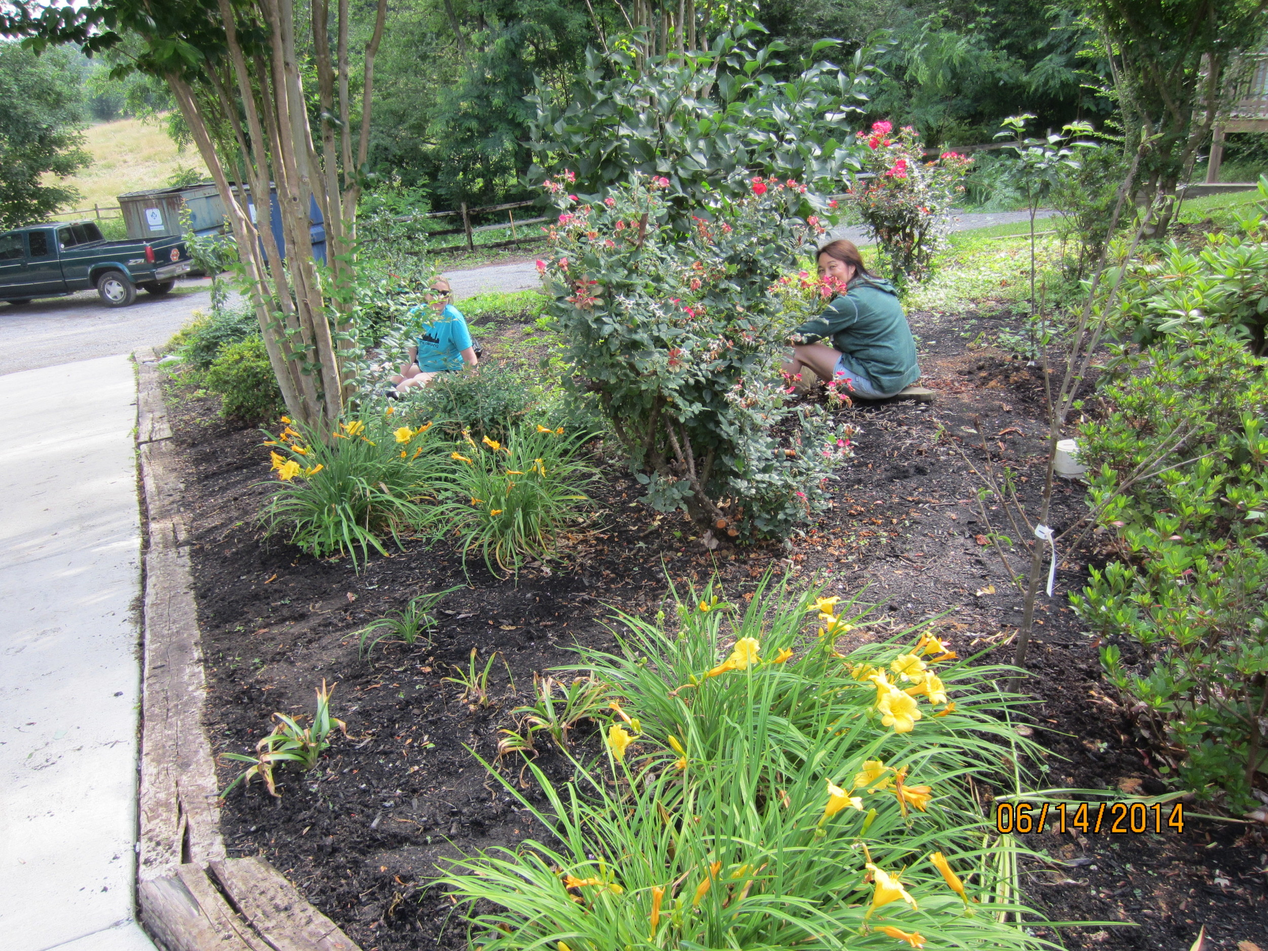 Lauren Pearle and Nellie More continue weeding, getting this bed ready for mulch.